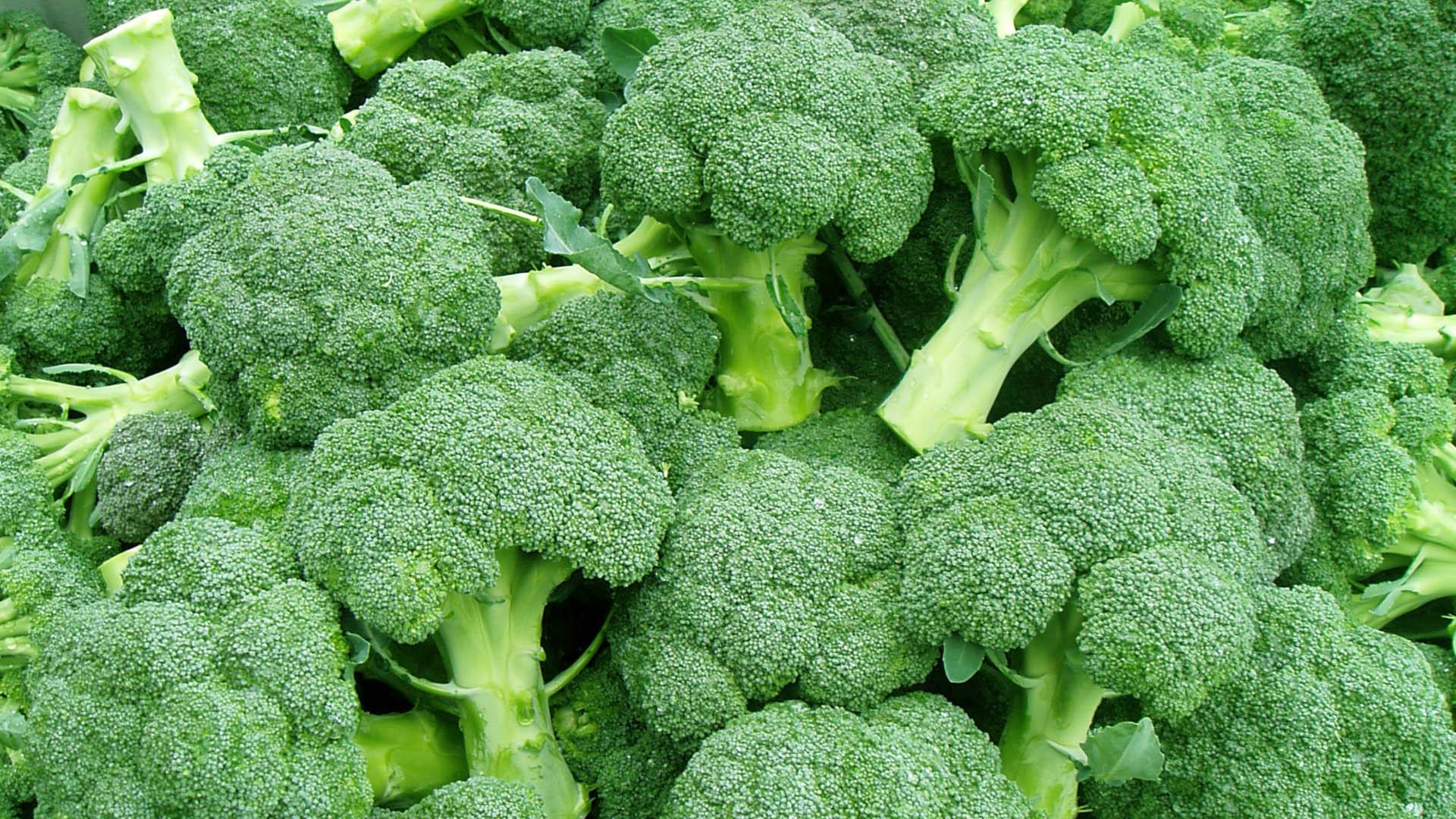 Dieta sintrom vitamina k